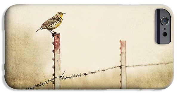 Nebraska iPhone Cases - Meadowlark on a Post iPhone Case by Pam  Holdsworth
