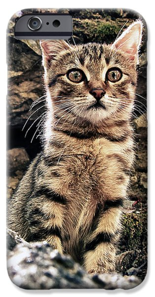 Stray iPhone Cases - Mediterranean Wild Babe Cat iPhone Case by Stylianos Kleanthous
