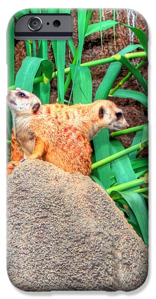 Meerkat Digital Art iPhone Cases - Meerkats iPhone Case by Barry Jones