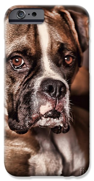 Boxer Photographs iPhone Cases - Meet Rocky iPhone Case by Deborah Benoit