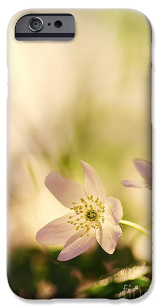 Bloosom iPhone Cases - Melody of Spring iPhone Case by Tanja Riedel