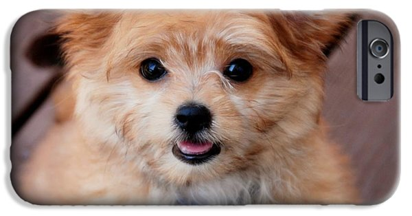 Small iPhone Cases - Mi-Ki Puppy iPhone Case by Angie Tirado