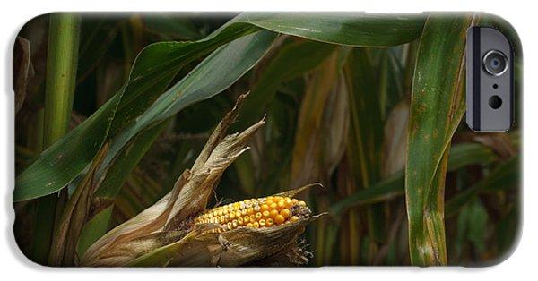 Corn iPhone Cases - Midwest Harvest iPhone Case by Steve Gadomski