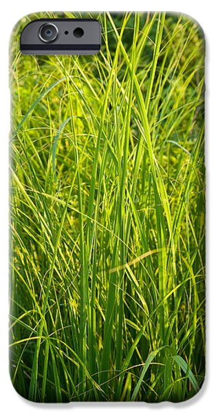 Corporate Photographs iPhone Cases - Midwest Prairie Grasses iPhone Case by Steve Gadomski