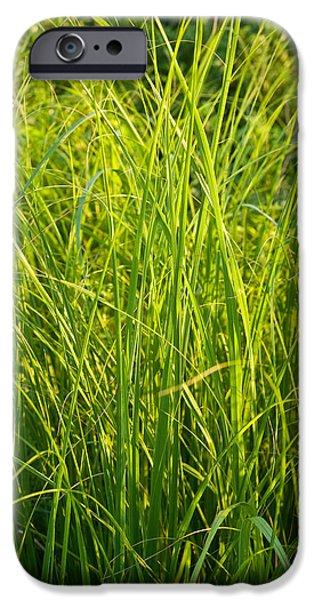 Corporate Art Photographs iPhone Cases - Midwest Prairie Grasses iPhone Case by Steve Gadomski