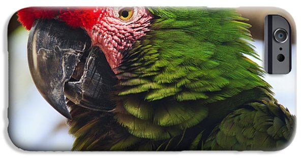Nature Study iPhone Cases - Military Macaw Parrot iPhone Case by Adam Romanowicz