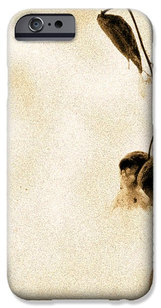 Milk Weed In A Bottle iPhone Case by Bob Orsillo