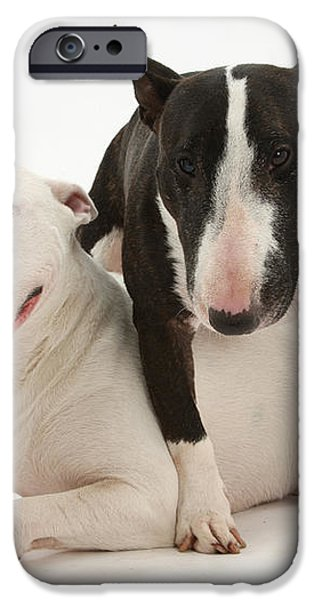 Miniature Bull Terrier Bitch, Lily iPhone Case by Mark Taylor
