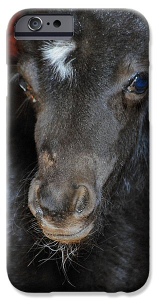 Oreo iPhone Cases - Miniature Pony Portrait iPhone Case by Jai Johnson