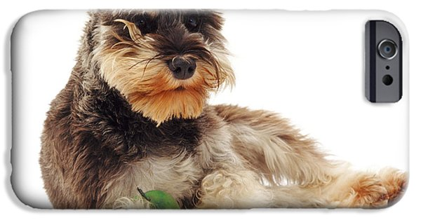 Cute Schnauzer iPhone Cases - Miniature Schnauzer iPhone Case by Jane Burton