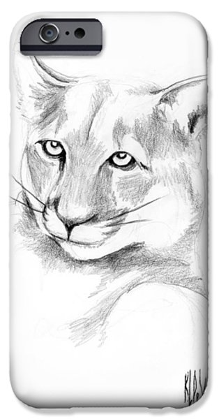Wild Life Drawings iPhone Cases - Missouri Mountain Lion  iPhone Case by Kip DeVore