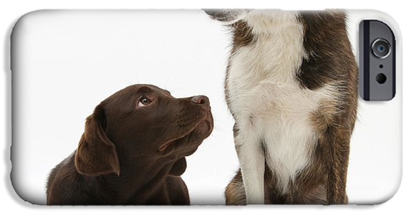 Chocolate Lab iPhone Cases - Mixed Breed And Chocolate Lab iPhone Case by Mark Taylor