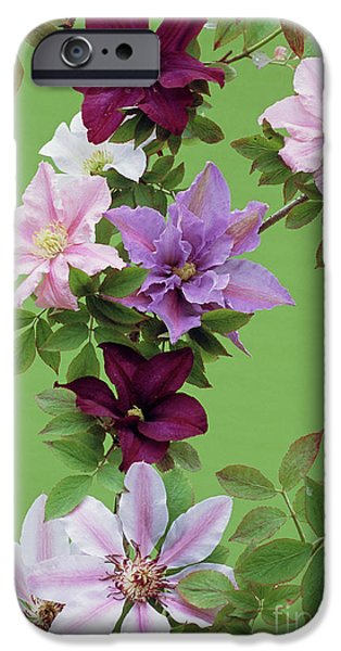 Mixed Clematis Flowers iPhone Case by Archie Young