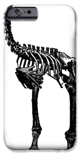 Moa iPhone Cases - Moa Skeleton iPhone Case by Granger