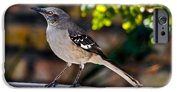 Arkansas iPhone Cases - Mocking Bird iPhone Case by Robert Bales