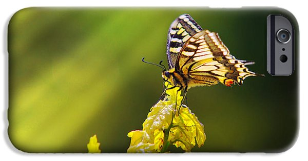 Antenna iPhone Cases - Monarch Butterfly iPhone Case by Carlos Caetano
