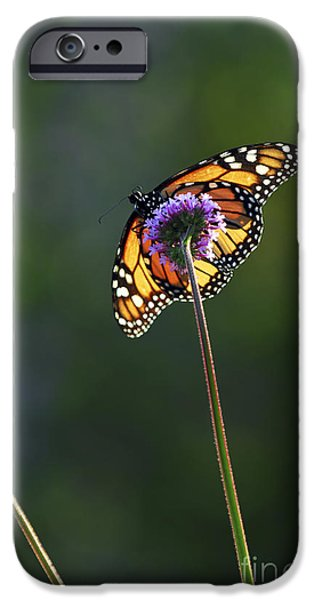 Monarch butterfly iPhone Case by Elena Elisseeva