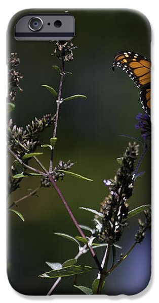 Monarch in Morning Light iPhone Case by Rob Travis