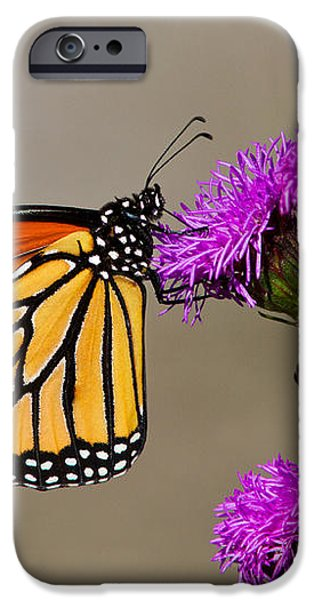 Monarch iPhone Case by Mircea Costina Photography