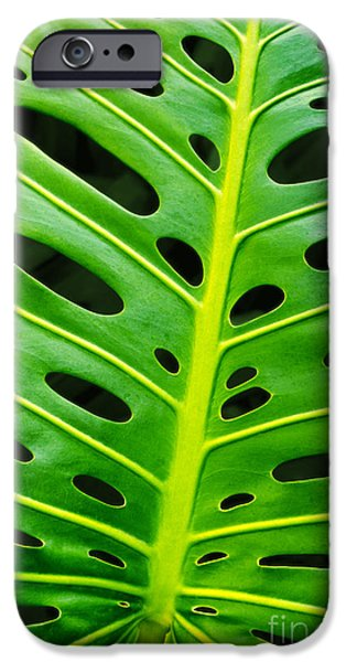 Flora Photographs iPhone Cases - Monstera leaf iPhone Case by Carlos Caetano