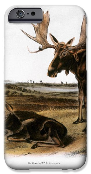 MOOSE DEER (CERVUS ALCES) iPhone Case by Granger