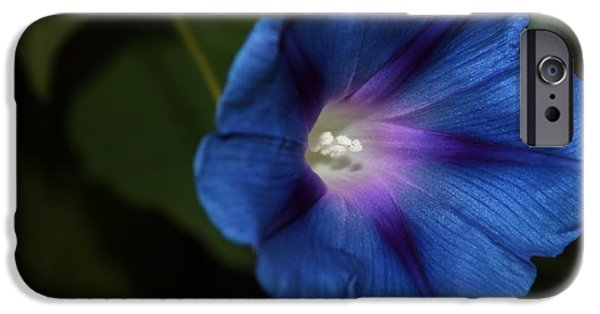 Morning iPhone Cases - Morning Glory 5 iPhone Case by Marjorie Imbeau