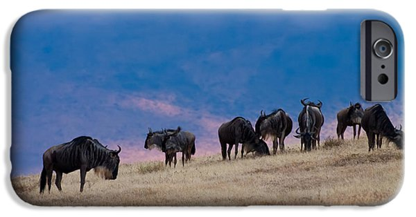 Kenya Photographs iPhone Cases - Morning in Ngorongoro Crater iPhone Case by Adam Romanowicz