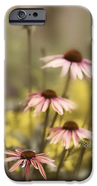 Cone Flower iPhone Cases - Morning in the Garden iPhone Case by Rebecca Cozart