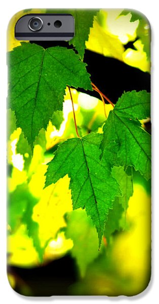 Morning  Light iPhone Case by Perry Webster