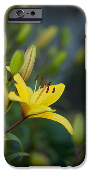 Lilies iPhone Cases - Morning Lily iPhone Case by Mike Reid