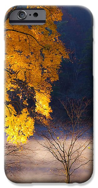 Morning Maple ll iPhone Case by Rob Travis