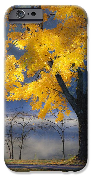 Dappled Light Photographs iPhone Cases - Morning Maple iPhone Case by Rob Travis