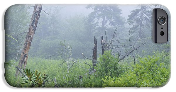 Fog Mist iPhone Cases - Morning Mist Cranberry Glades iPhone Case by Thomas R Fletcher