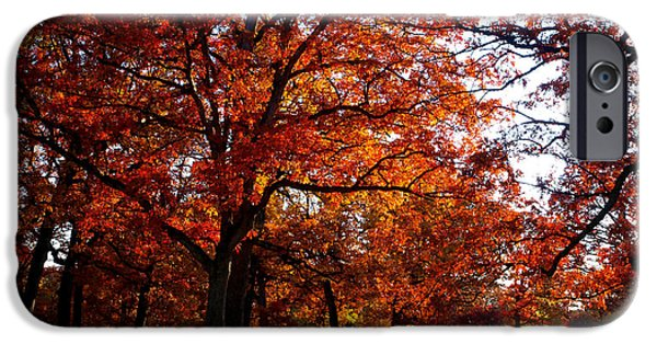 Morton iPhone Cases - Morton Arboretum in colorful fall iPhone Case by Paul Ge