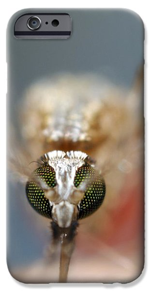 Eating Entomology iPhone Cases - Mosquito Feeding iPhone Case by Sinclair Stammers