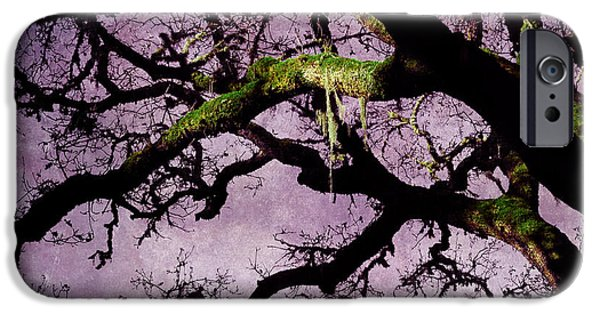 Windy iPhone Cases - Moss on an Oak Tree Branch iPhone Case by Laura Iverson