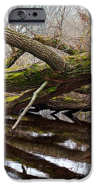 Mossy Tree iPhone Case by Ms Judi