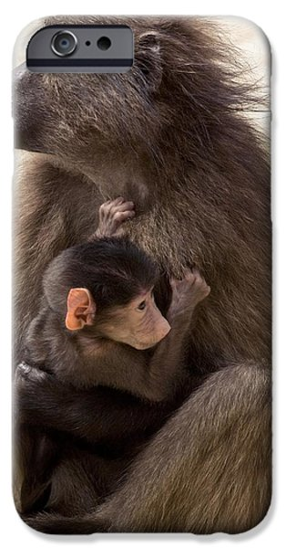 Parental Care iPhone Cases - Mother And Baby Chacma Baboon iPhone Case by Bob Gibbons