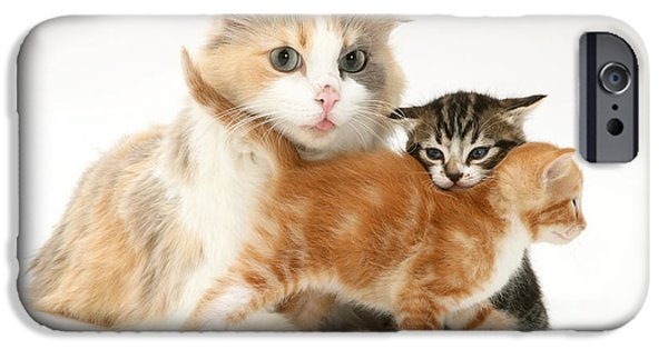 Housecat iPhone Cases - Mother Cat And Kittens iPhone Case by Jane Burton