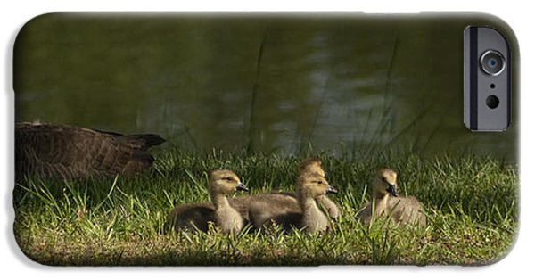 Baby Bird iPhone Cases - Mothers Closely Watch From The Shadows iPhone Case by Kathy Clark