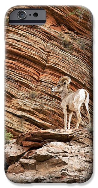 Ledge iPhone Cases - Mountain goat iPhone Case by Jane Rix