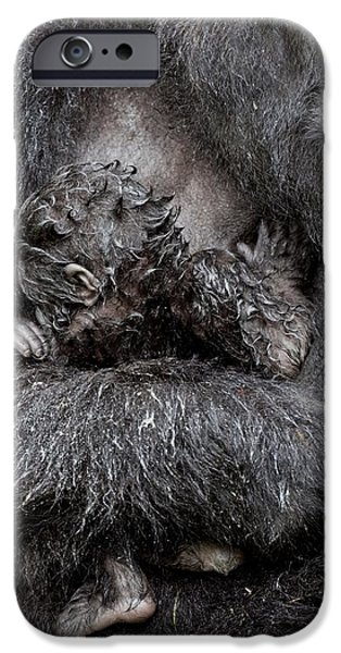 Parental Care iPhone Cases - Mountain Gorilla And Baby iPhone Case by Tony Camacho
