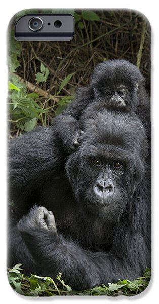 Recently Sold -  - Fauna iPhone Cases - Mountain Gorilla Mother And 1.5yr Old iPhone Case by Suzi Eszterhas