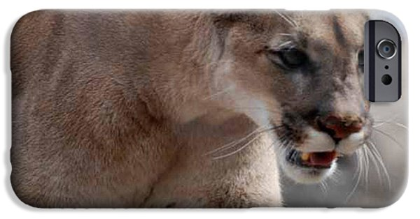 Large Cats iPhone Cases - Mountain Lion iPhone Case by Paul Ward