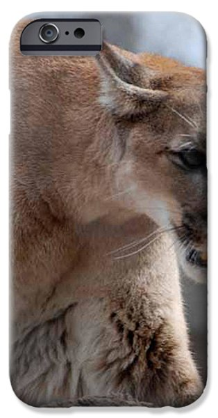 Mountain Lion iPhone Case by Paul Ward