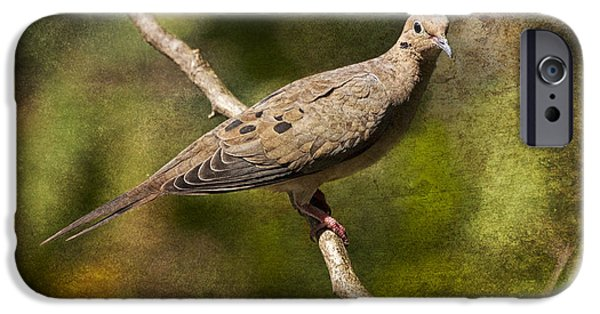 Gamebird iPhone Cases - Mourning Dove on a Branch iPhone Case by Randall Nyhof