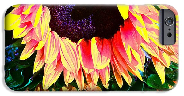 Sunflower Photograph iPhone Cases - Mourning iPhone Case by Gwyn Newcombe
