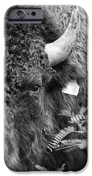 Mr Goodnight's Bison iPhone Case by Melany Sarafis