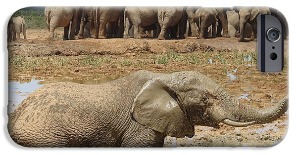 Wildlife Imagery iPhone Cases - Mud Bath iPhone Case by Ramona Johnston