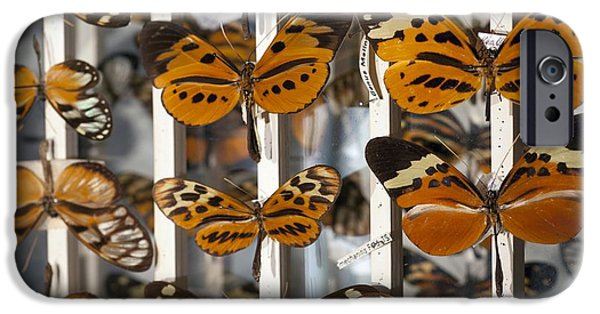 Bates iPhone Cases - Muller Butterfly Tiger Mimicry Complex 1 iPhone Case by Paul D Stewart